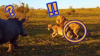 笑ってしまう動物の性行為?! 続きは動画をご覧ください。 ◇【絶対笑う...