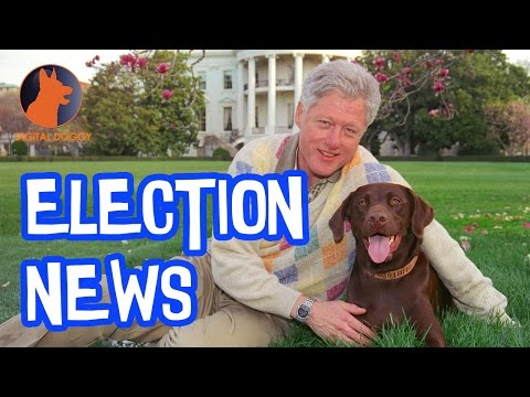 Election News; Presidential Pooches!