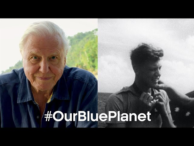 David Attenborough's Favourite Ocean Memory #OurBluePlanet | BBC Earth