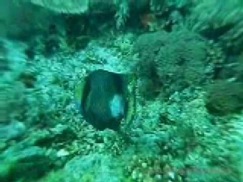 reef tubataha 12