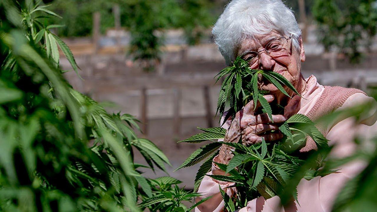 Бабушек коноплю и про фильм марихуана сигареты