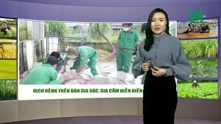 VTC14 | Thời tiết nông vụ 03/03/2018 | Thời điểm dễ bệnh cúm gia cầm, bệnh lở mồm long móng gia súc