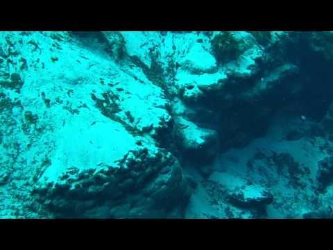 snorkeling-with-an-alligator-alexander-springs-florida