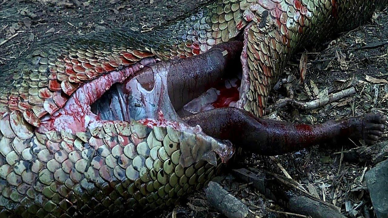 Download Anacondas Tribute