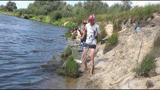Припять ловля на фидер август 2017//Pripyat fishing for the feeder in August 2017
