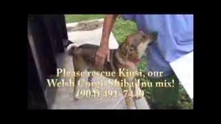 Please Rescue Kiusi!