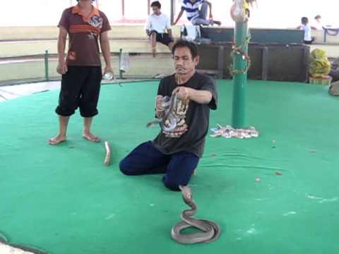Snake Farm. Bangkok, Thailand - YouTube
