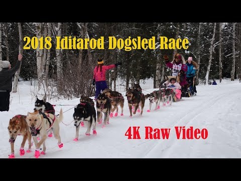 2018 Iditarod Dogsled Race Video