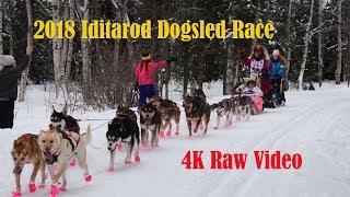 2018 Iditarod Dogsled Race Video
