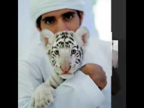 Sheikh Hamdan have tender heart