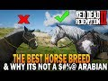 The BEST HORSE Breed In RDR2 And Why It S Not An Arabian Red Dead Redemption 2 Horses mp3