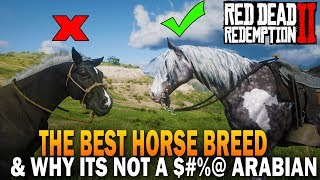 The BEST HORSE Breed In RDR2 And Why It's Not an Arabian - Red Dead Redemption 2 Horses