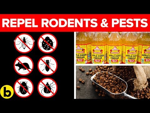 13-non-toxic-ways-to-get-rid-of-pests-and-rodents-naturally
