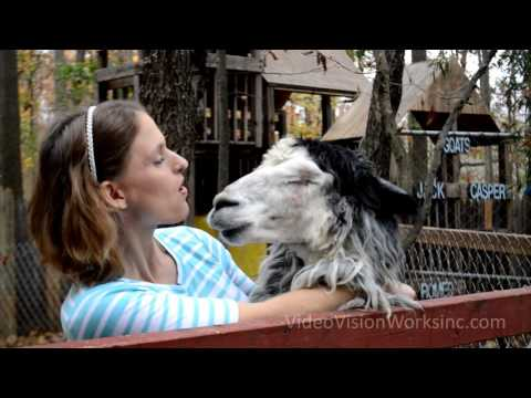"Animal Rescue Music Video to Andy Grammer's song ""Honey I'm Good"""