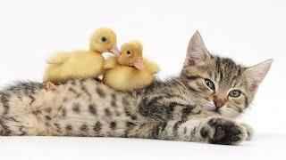 Заботливая мамаша, видео про животных