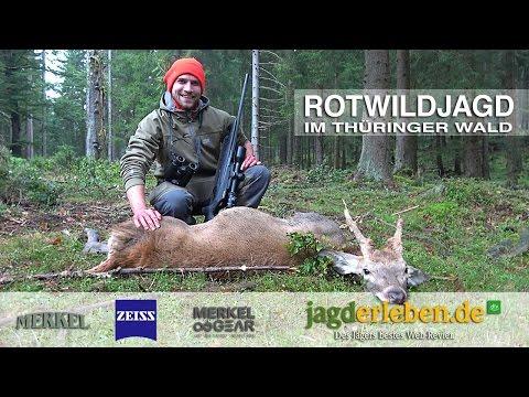 Rotwildjagd in Thüringen - Zu Besuch bei Merkel Jagdwaffen in Suhl