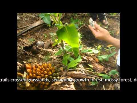 Balagbag trek, traverse and exploration.wmv