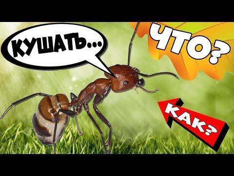 Как ухаживать за муравьями и муравьиной фермой дома?
