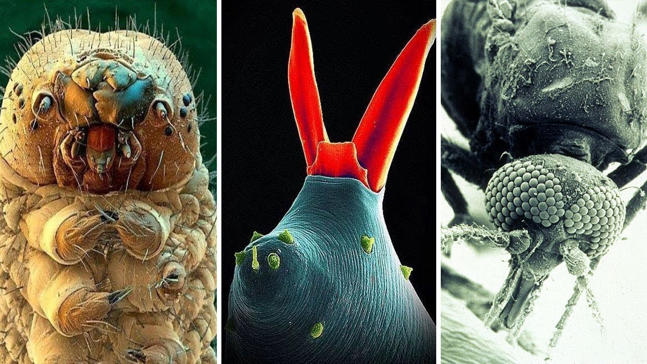 его фотографии сделанные цифровым микроскопом оказываются
