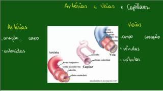 Do veias sanguíneo capilares fluxo artérias