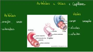 Dos vasos sanguíneos wikipedia estrutura