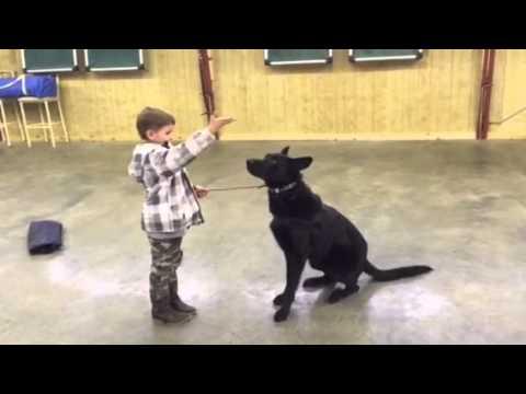 Black German Shepherd, A Boy, A Bad Guy, Protection Dog For Sale, Gunner