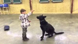 Black German Shepherd, A Boy, A Bad Guy, Protection Dog For Sale, Gunner