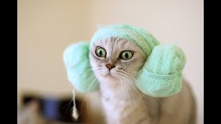♥ ♥ ♥ Viral Cute and Funny Animals Compilation Animal Lover 😻 #9