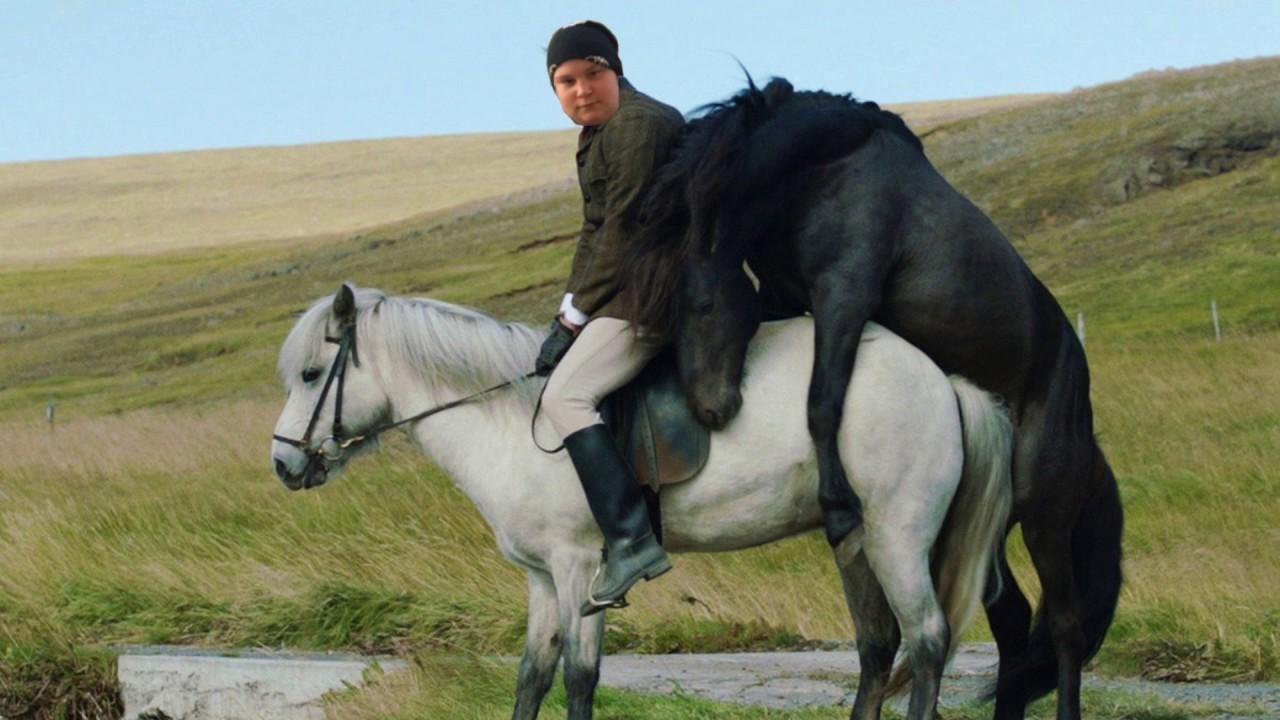 Schwule Pferde