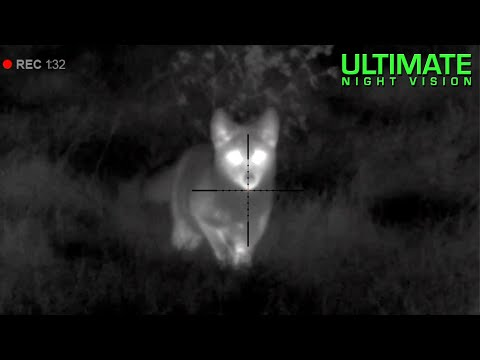 Thermal Predator Hunting | 45 Coyotes Down with the Pulsar Thermion XM50