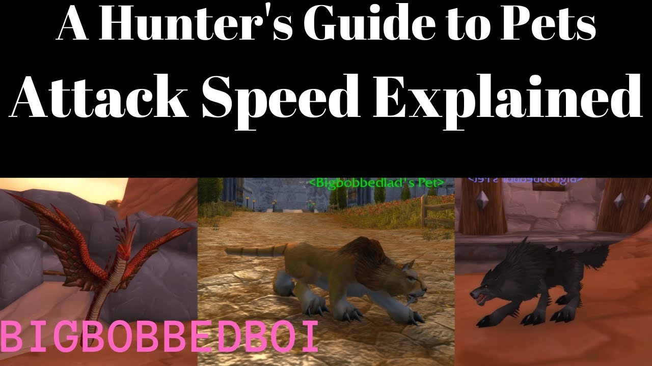 A Hunter S Guide To Pets Attack Speed Pve Pvp Misconceptions Classic Wow Tutorial Youtube