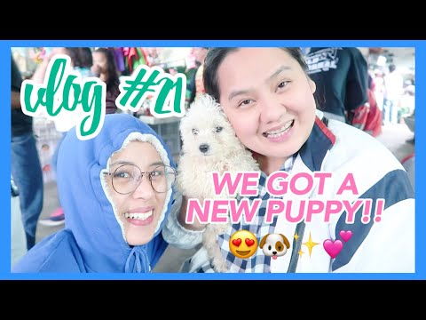Vlog #21: Trip to Baguio City, Philippines (WE BOUGHT A NEW PUPPY!!) | Eunice Santiago