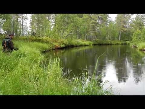 Harrboms i Hedmark