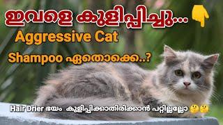 How To Bath Persian Cats Malayalam | പൂച്ചയെ എങ്ങനെ കുളിപ്പിക്കാം #mehrinscatvlog
