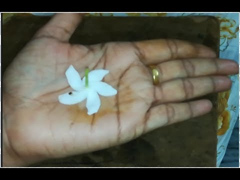 BEAUTIFUL MEHNDI DESIGN USING FLOWER| SIMPLE MEHNDI DESIGN |
