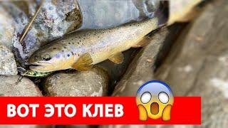 Рыбалка на форель в Кыргызстане 2021 Отличный апрельский клев