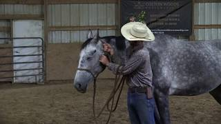 How to halter your horse for good habits and safely