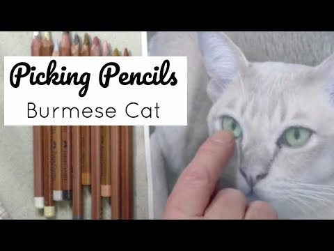 Picking Pencils for a Burmese Cat