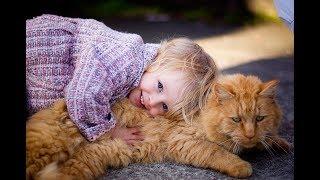 ЛУЧШИЕ ГИПОАЛЛЕРГЕННЫЕ ПОРОДЫ КОШЕК  Выбираем питомца для аллергетика  Allergic to cats
