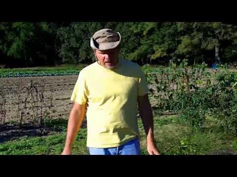 Organic Gardening in South Carolina