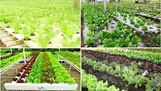 การปลูกผักไฮโดรโปนิกส์ (hydroponics)