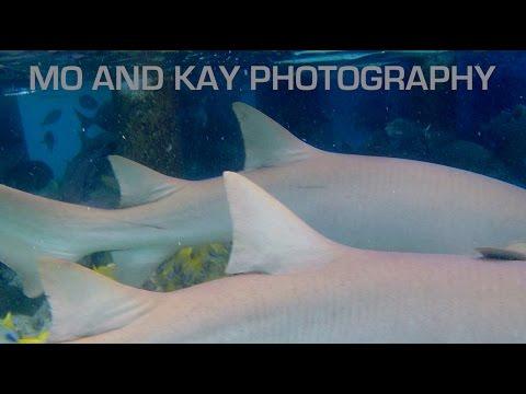 MALDIVES TROPICAL PARADISE v2 - PHANTOM 3 - SHARK ATTACK - DOLPHINS - WILDLIFE