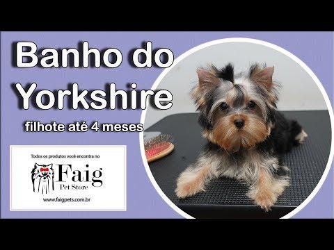 Como Banhar o filhote de Yorkshire Terrier