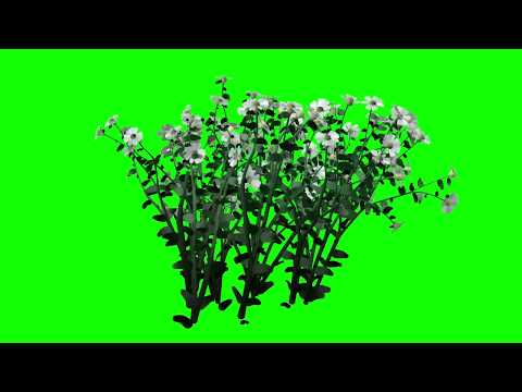 Green Screen Flower Trees Effects Free thumbnail