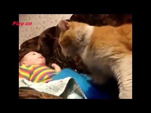 Кот укладывает спать ребенка. Cat compilation