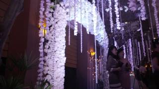 Rain Forest by Misa Vu - Cuway & Kieu Trinh Wedding