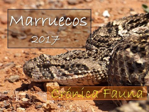 Fauna de Marruecos HD