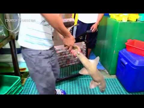 How sharks are killed in a live fish market in downtown Manila