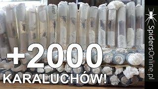 Baixar Unboxing 2000 KARALUCHÓW & 100 N.incei - spidersonline.pl