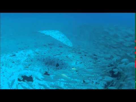 Our favourite shots! | Butterfly Ray